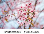 wild himalayan cherry forest... | Shutterstock . vector #598160321
