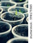 Young Seedling. Young Seedling...