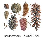 watercolor hand painted cones.... | Shutterstock . vector #598216721