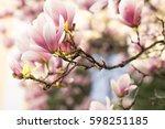 Beautiful Magnolia Flowers....