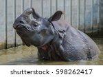 Rhino In The Water