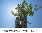 Small photo of Broken bones tree and Damocles tree and Indian trumpet flower and blue sky background