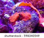 corals in the aquarium light... | Shutterstock . vector #598340549