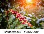 coffee beans on trees | Shutterstock . vector #598370084