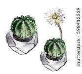 succulents drawn in watercolor...   Shutterstock . vector #598412339