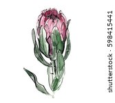 protea painted in watercolor on ...   Shutterstock . vector #598415441