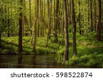 Spring Deciduous Forest With...
