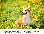 Pembroke Welsh Corgi Dog Puppy...