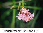 spring flower   viburnum...   Shutterstock . vector #598565111