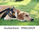 police dog relaxing on grass. | Shutterstock . vector #598610429