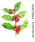 red coffee arabica beans... | Shutterstock . vector #598612835