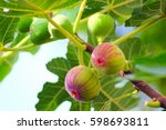 Small photo of Fig fruit