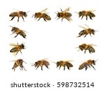 group of bee or honeybee in... | Shutterstock . vector #598732514