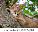 portrait of a lion. close up.... | Shutterstock . vector #598764281