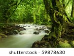 Tropical Rainforest And River...
