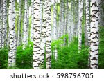 Birch Forest In Sunlight In Th...
