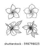 hand drawn vector illustration  ... | Shutterstock .eps vector #598798025