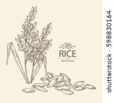 background with rice. hand... | Shutterstock .eps vector #598830164