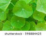 green nasturtium leaves... | Shutterstock . vector #598884425