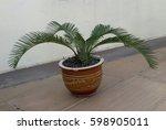 Ornamental Palm Tree Planted...