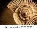 Closeup Of An Ammonite...