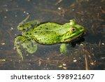 frog pelophylax ridibundus | Shutterstock . vector #598921607