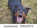 Aggressive Rottweiler Barking...