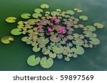 Lotus Pattern In Green Pond