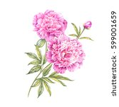 set of watercolor pink peonies. ... | Shutterstock . vector #599001659