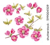 Stock photo awesome collection of spring flowers watercolor botanical illustration of sakura flower elements 599004509