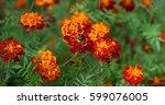 beautiful natural floral... | Shutterstock . vector #599076005