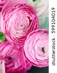 Small photo of Close up of Pink Ranunculus Buttercup Flowers , Spring or Mothers Day Concept