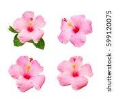 collection of hibiscus flower... | Shutterstock . vector #599120075
