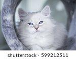 Photo Of Neva Masquerade Cat...