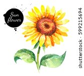 Hand Drawn Watercolor Sunflower ...