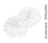 Outline Drawing Dahlia Flowers...