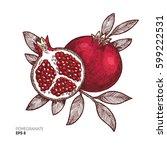 pomegranate vintage... | Shutterstock .eps vector #599222531