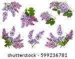 Set Of Flowering Blooming...