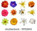 various isolated flowers | Shutterstock . vector #5992843