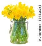 Bright Yellow Daffodils Flower...