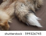 Small photo of fox tail 2