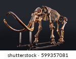 Small photo of The skeleton of a mammoth in the dark