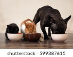 Stock photo cats and a dog eating pet food from bowls 599387615