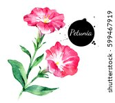 hand drawn watercolor petunia... | Shutterstock . vector #599467919
