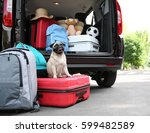 car trunk with cute pug and... | Shutterstock . vector #599482589