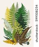 leaver ferns. composition.... | Shutterstock .eps vector #599508254
