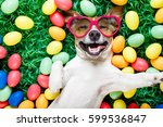 Stock photo funny jack russell easter bunny dog with eggs around on grass laughing taking a selfie with 599536847