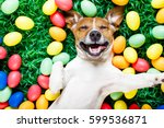 Stock photo funny jack russell easter bunny dog with eggs around on grass laughing taking a selfie with 599536871