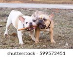 Couple Of Nice Dog Breed Frenc...