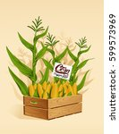 Corn In A Wooden Box